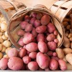 Aren't Potatoes Fattening?